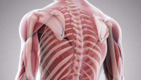 Секрет наших мышц