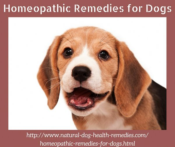 Learn About The Most Useful Homeopathic Remedies For Dogs And How