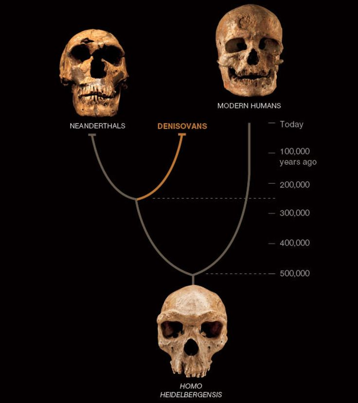 DNA Reveals Mysterious Human Cousin With Huge Teeth