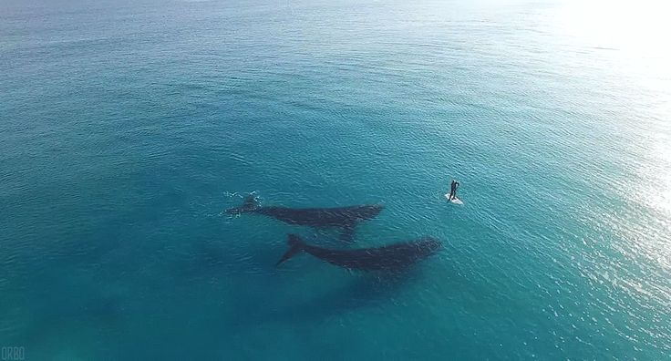 Pin by claire goodwin on ALIVE   Pinterest   Ocean, Sea and Whale