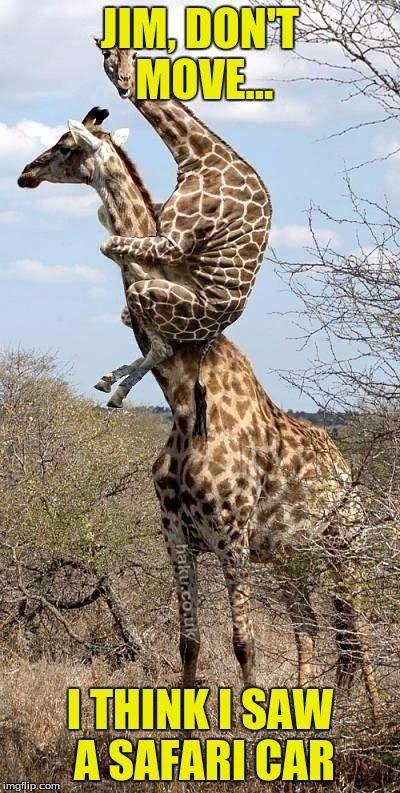25+ best ideas about Facts about giraffes on Pinterest | Giraffe ...