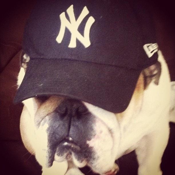 Bulldogs for NY