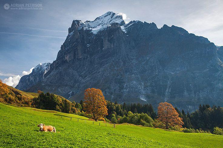 Green fields in Switzerland.