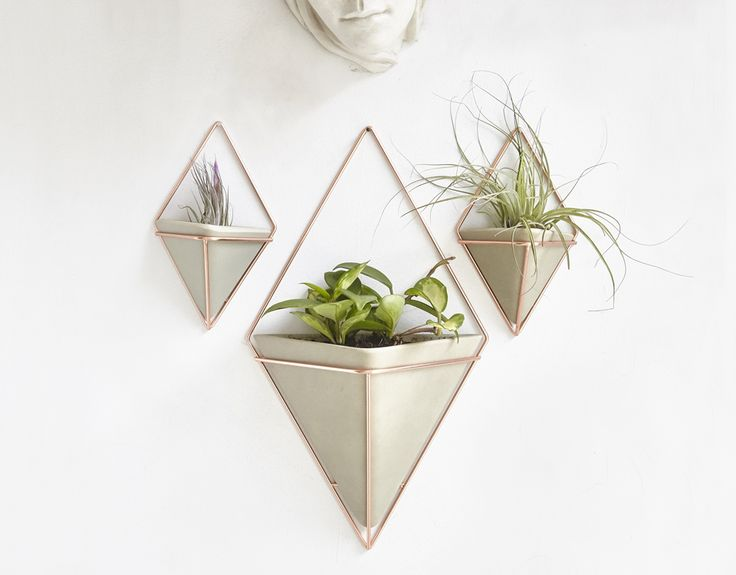 Umbra Trigg Wall Planters make it easy to add Air Plants, Succulents and other tropical plants into your decor.