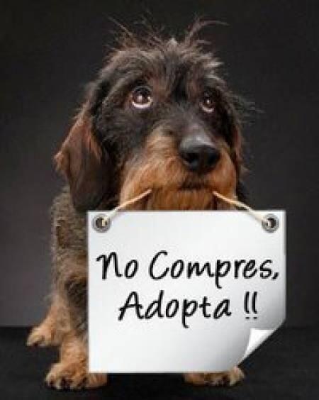 No compres, adopta !!!!