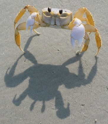 ghost crabs - - Focus On the Positive: The Marine & Oceanic Sustainability Foundation www.mosfoundation.org