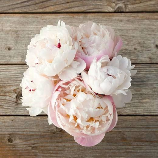 Fresh Cut Bouquets - Flower Bouquet Delivery - Pegasus