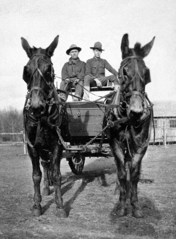 Two WW1 era soldiers in a horse drawn wagon at training camp, ca. 1918.