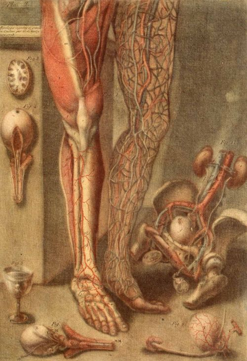Anatomy of the Parts of a Man and Woman, by artist Jacques Fabien Gautier d'Agoty