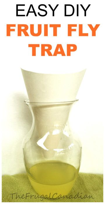 DIY Homemade Fruit Fly Traps How To Get Rid Of Fruit Flies Naturally