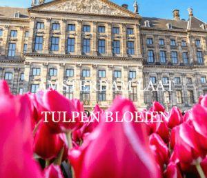 Het Amsterdam Tulp festival 2017 is nog tot en met 14 mei te bewonderen op verschillende plaatsen in Amsterdam   Visit Amsterdam for the yearly Tulip festival untill mei 14th 2017. Visit shop.holland.com for Dutch design and gifts inspired by tulips.