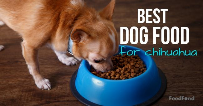 20 Best Dog Foods For Chihuahuas In 2019 Best Dog Food Dog Food