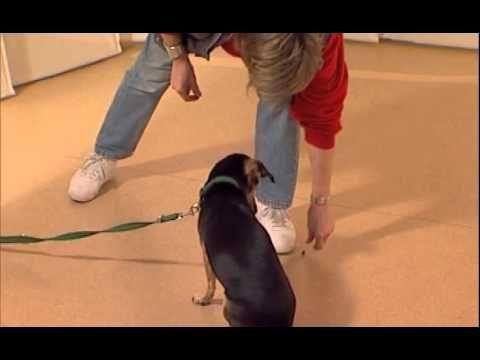 Как отучить собаку есть с пола? - Дрессировка собак дома с нуля -