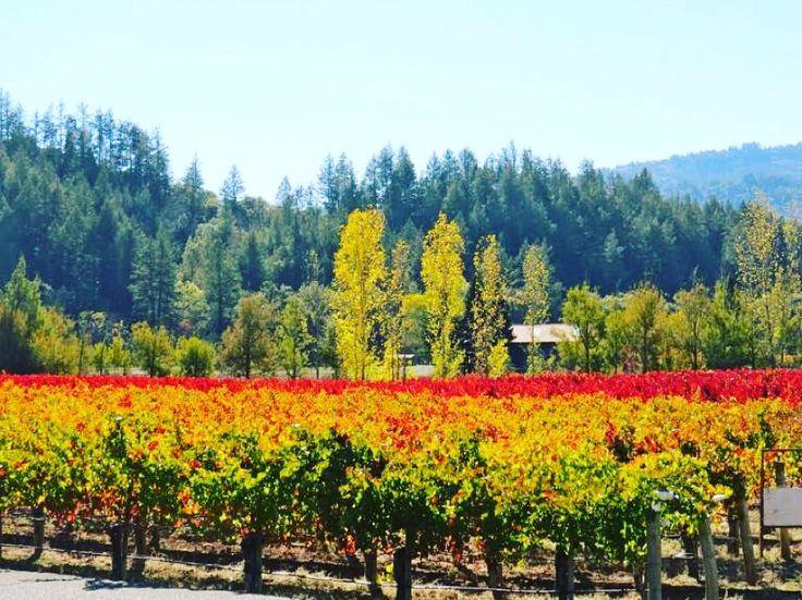 Direction les vignobles de la célèbre Napa Valley ! En savoir plus : http://winewithme.fr/direction-les-vignobles-de-la-celebre-napa-valley/