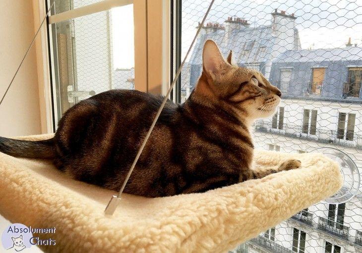les 25 meilleures id es concernant hamac pour chat sur pinterest lit chat diy bidouilles pour. Black Bedroom Furniture Sets. Home Design Ideas