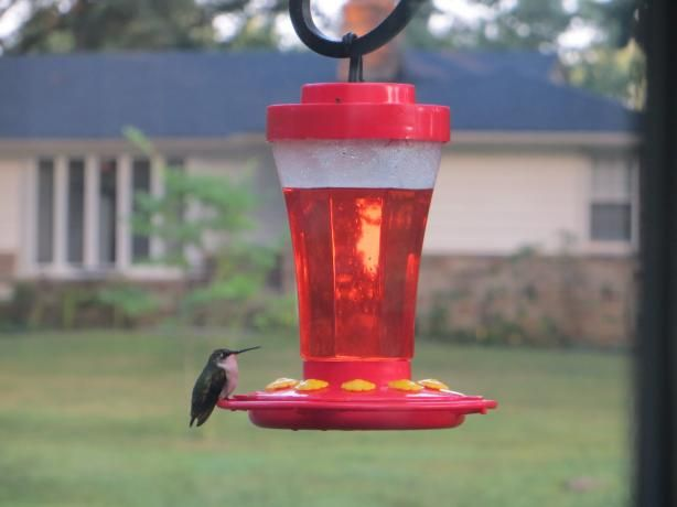 Make your own hummingbird food the healthy way~ red food coloring can be harmful to them, they will find this nectar just as easy!