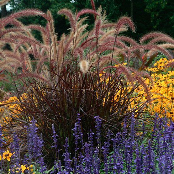 100 best images about garden ideas on pinterest gardens for Fountain grass landscaping ideas
