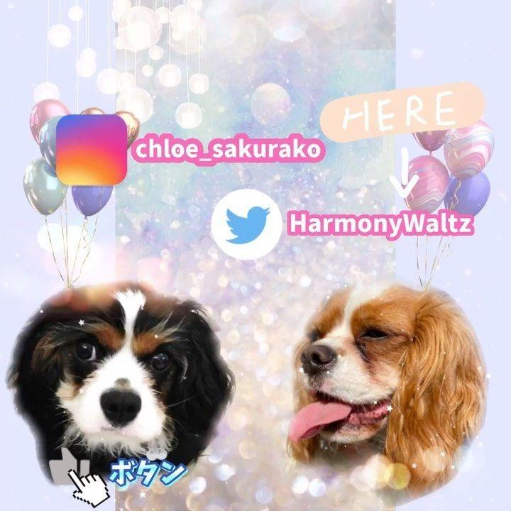 クロエ 桜子はinstagramを利用しています いつも疲れて帰ってきて はぁ ってなっても 二人の笑顔を見ると一気に疲れが吹っ飛びます ᙏ 良かったらfollow してね Animals Dogs