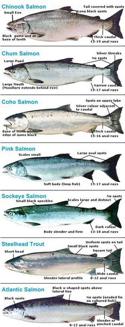 #Steelhead & #Salmon For more fly fishing info follow and subscribe www.theflyreelguide.com Also check out the original pinners/creators site and support