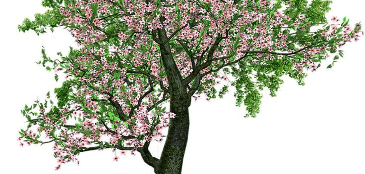 Your Natural Prescription for IBS | Basmati