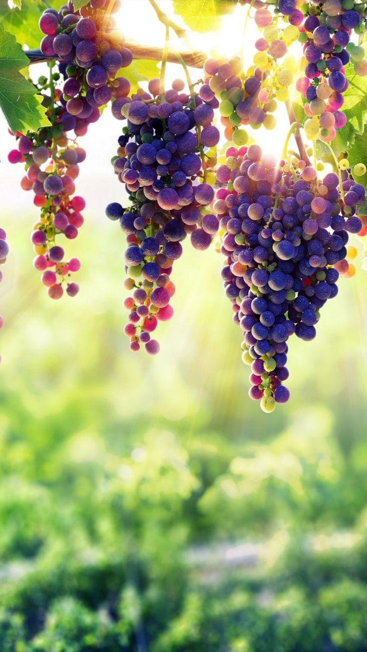 Nice Grapes 2
