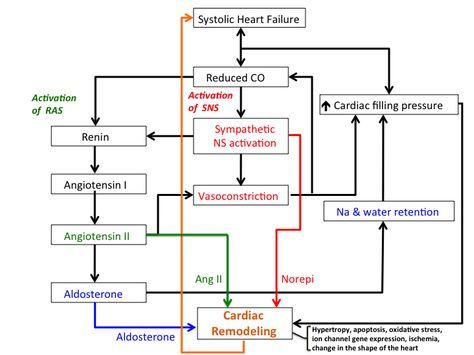 treatment_of_heart_failure [TUSOM | Pharmwiki]