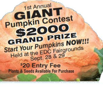 Giant Pumpkin Festival Next Week at Fairgrounds | In El Dorado County. This is the first year El Dorado County will have it's own Giant Pumpkin Festival Organized by Constantly Growing Stores. We are all looking forward to this popular pumpkin weigh-in, regulated by the state of California. 1st place prize for the biggest pumpkin is $2000.00
