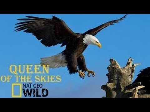 Eagle Documentary National Geographic Full QUEEN OF THE SKIES - YouTube
