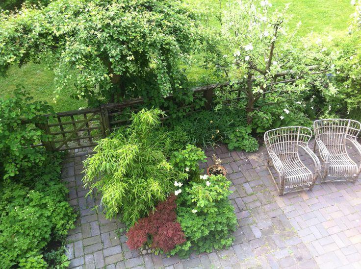 Trädgård på liten yta.