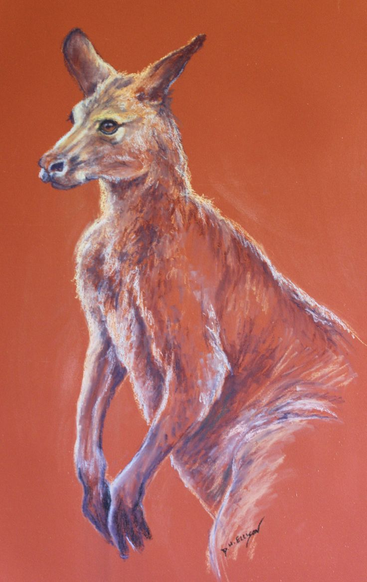 Australian Grey Kangaroo in Pastel by Denise Ellison            This Roo was in our paddock with his mates having a party (SOLD)