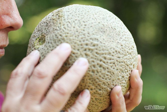 How to pick a ripe watermelon, cantaloupe, and honeydew melon.