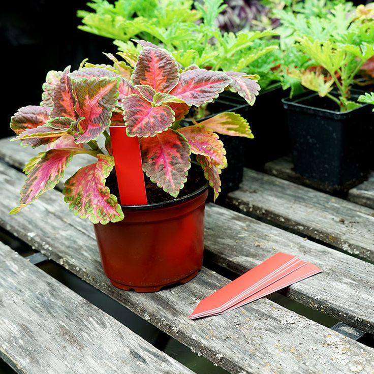 Plantetiketter 20-pack, röda #Plantetiketter #Växtetiketter