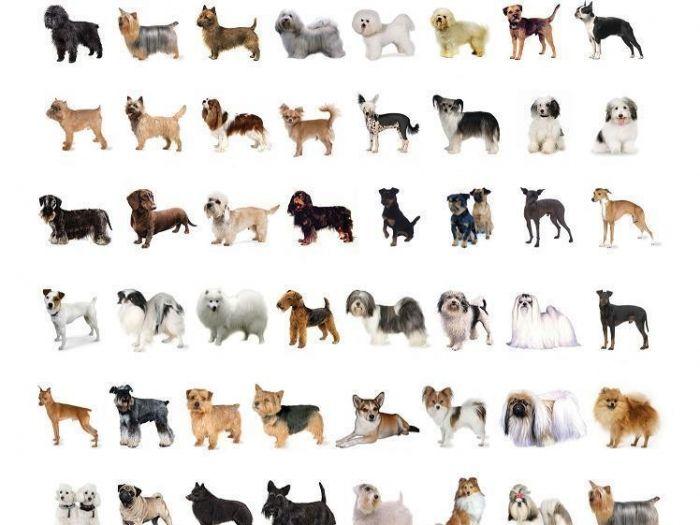 """""""Los perros del mundo"""" agrupados por su origen geográfico - Taringa!"""