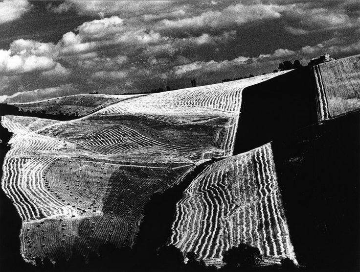 Metamorfosi della terra series  Mario Giacomelli, 1960