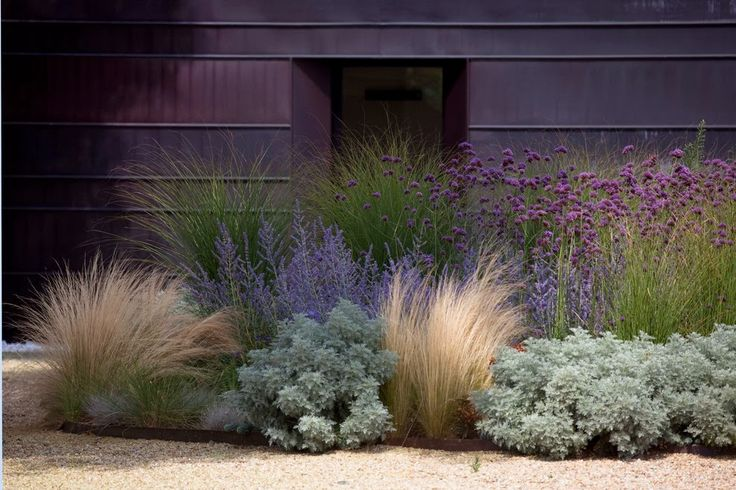 grasses, artemisia, succulents, Russian sage, & verbena bonariensis; contrast of texture & form create a lot of visual interest, heights lead the eye from front to back.