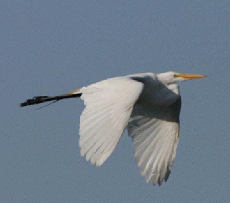 Ms de 25 ideas increbles sobre Aves volando en Pinterest