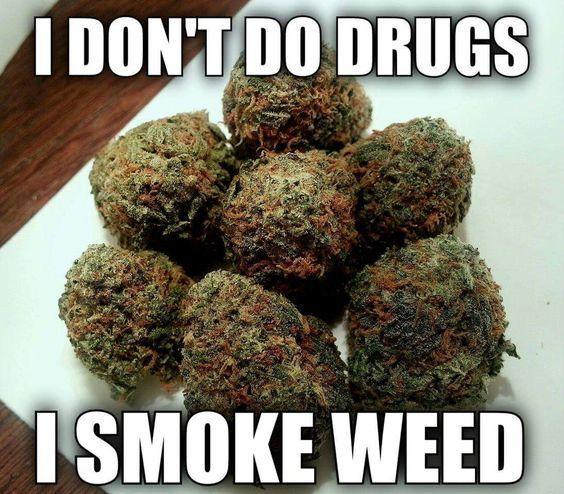 """ """"I DON'T DO DRUGS I SMOKE WEED INSTEAD!! #Marijuana #CannabisLove #Cannabis #LegalizeIt #PotValet #MarijuanaMadness #SmokingWeed #santamonica"