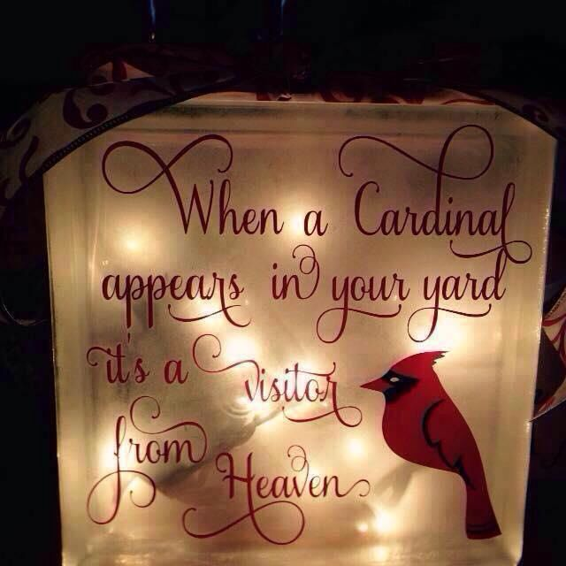 10 Best Cardinals Images On Pinterest Cardinals My Love And Quote