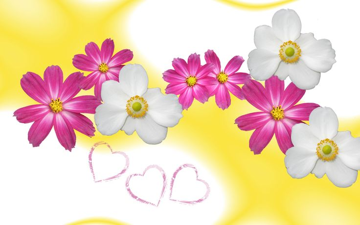I Love Pink Wallpapers Group  1600×1200 Yellow And Pink Wallpapers (39 Wallpapers) | Adorable Wallpapers