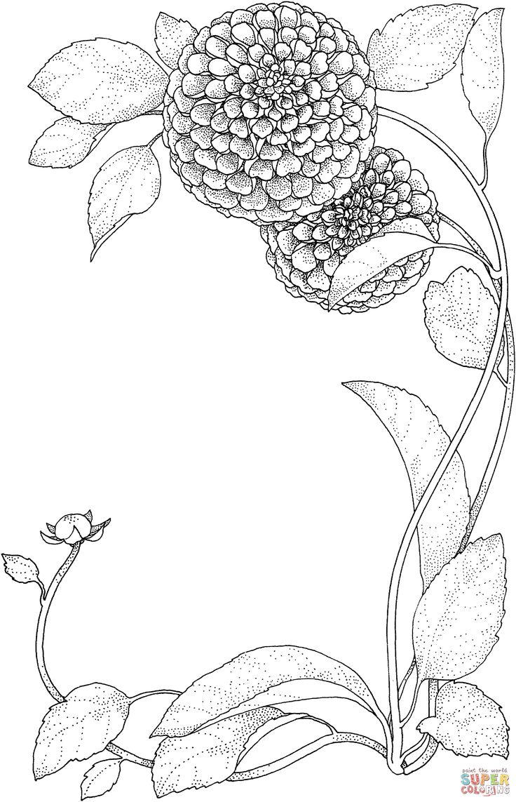 Zinnia Flowers coloring page | SuperColoring.com