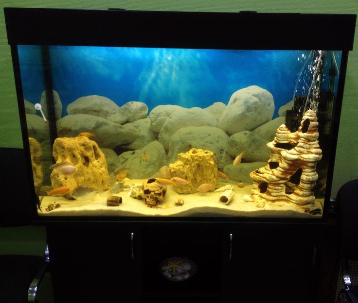 По заказу коммерческой организации сотрудниками компании AquaHouses был установлен, запущен и оформлен аквариум в стиле псевдо море..