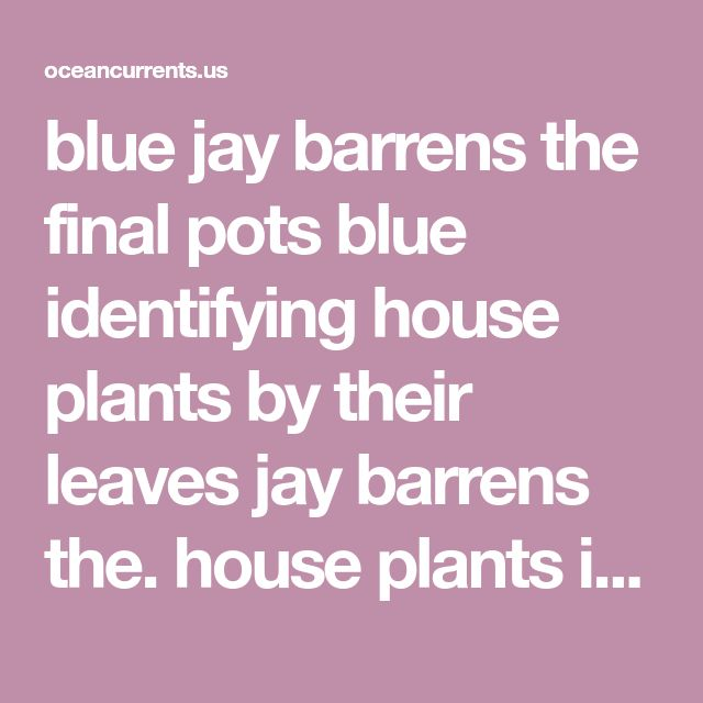 blue jay barrens the final pots blue identifying house plants by their leaves jay barrens the. house plants identify by pic help identify these house plants from a dish garden. everyone would love to have a fresh clean living space to come home to each day and while part of that is up to us we can put some house plants to. identifying common house plants identifying common house plants spider lily throughout design. landscaping stack exchange houseplant common house plants names…