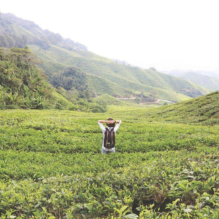 Der grüne Genuss #cameronhighlands #bohteaplantation #ipoh #malaysia #bohtea #tee #teatime #besteaussicht #view #viewpoint #wandern #hike #herschelsupply #gehmalreisen #weltreise