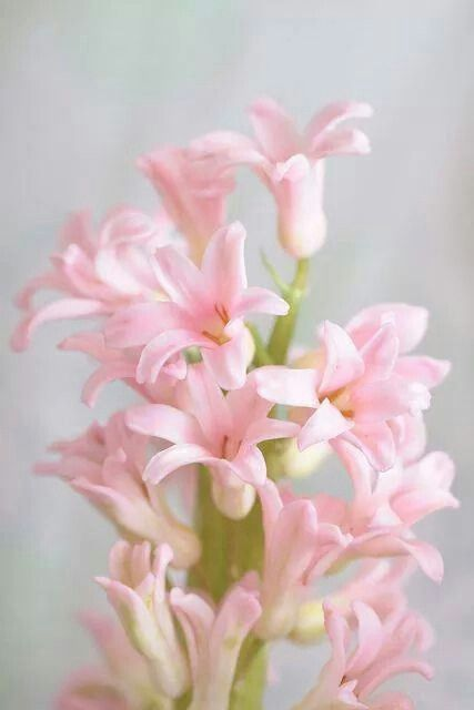 922 best images about flowers on pinterest gerber for Beautiful pastel colors