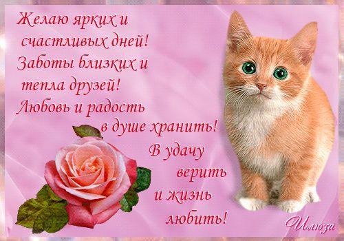"""Анимированная открытка """"милые коты"""""""