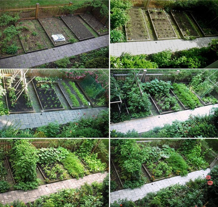 219 Best Images About Vegetable Garden Ideas On Pinterest