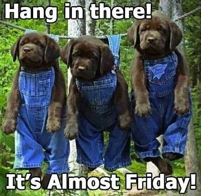 Don't worry, It will come back....so as it says, Hang in there ...what's six more days!