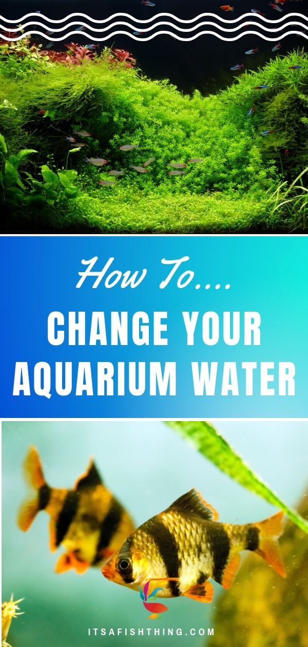 How To Change Aquarium Water Quickly And Safely For Your Fish Fish Tank Plants Cleaning Fish Fresh Water Fish Tank
