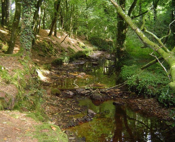 Connu 179 best La forêt de Brocéliande images on Pinterest   Brittany  BE93