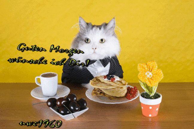 guten morgen katze essen guten morgen katzen und guten morgen. Black Bedroom Furniture Sets. Home Design Ideas